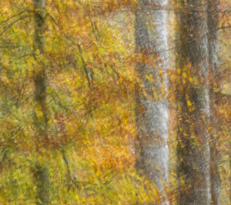 Herbstfarben I | Longueur focale : 400.0 mm | Ouverture : 13.0 | Exposition : 0.6 | ISO : 100